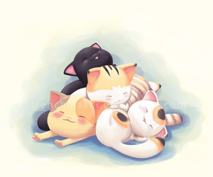 adorable, purr, and cat image