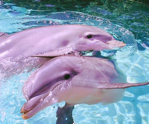 beautifull, dolphin, and love image