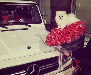 car, roses, and dog image
