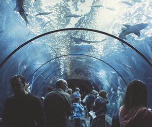 shark, water, and aquarium image