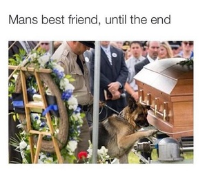 best friend, dog, and respect image