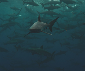 shark, ocean, and nature image