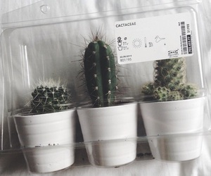 cactus, tumblr, and grunge image