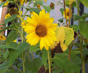flower power, summer pics, and yellow image