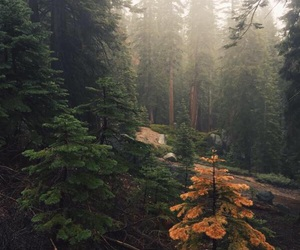 forest and goals image