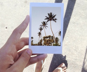 summer, polaroid, and palm trees image