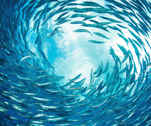 blue, fish, and life image