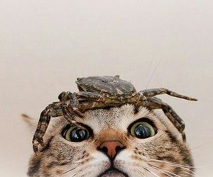 cat, cute, and crab image