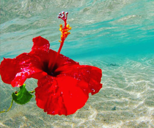 beach, happiness, and hibiscus image