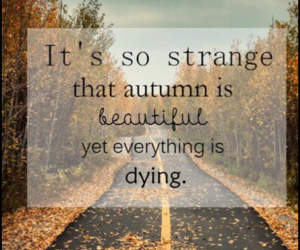 autumn, beautiful, and quote image