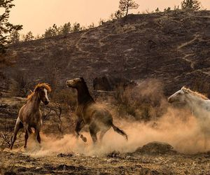 animals, free, and wild image