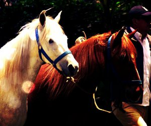 animals, black and white, and horse image