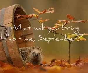 autum, leaves, and hello september image