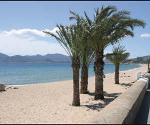 cannes, plage, and palmiers image