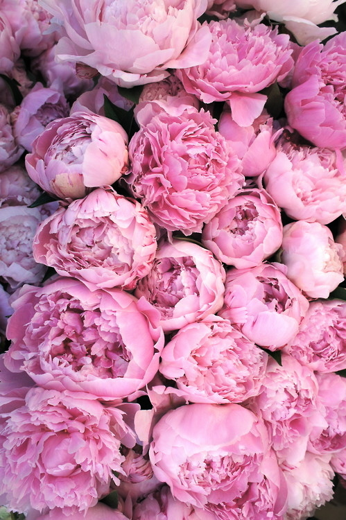 Fiori We Heart It.61 Images About Natures Beauty On We Heart It See More About