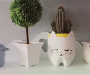 basket, cactus, and cat image