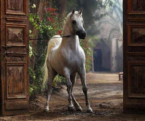 horse and door image