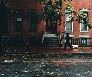 autumn, rain, and dog image