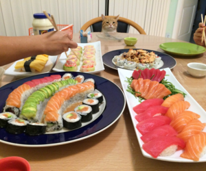 sushi and cat image