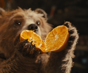 bear, marmalade, and paddington image