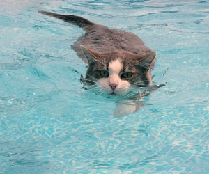 animal, cat, and water image