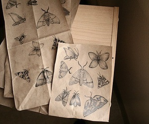 butterfly and drawings image