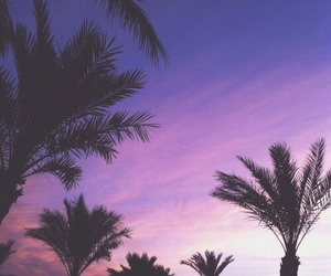 palms, purple, and summer image