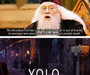 harry potter, yolo, and dumbledore image