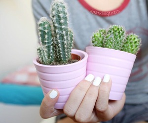 cactus, tumblr, and pink image