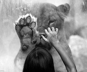 animals, play, and rain image
