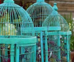 cage, blue, and bird image