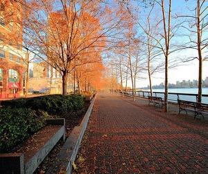 beautiful, photography, and autumn image