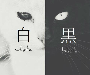 black, cat, and japanese image