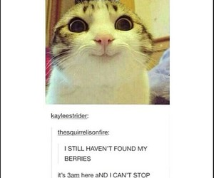 berries, funny, and cantstop image