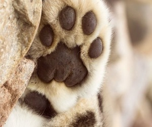 animal, cat, and paws image