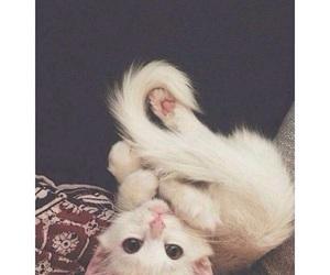 cat, tumblr, and white image
