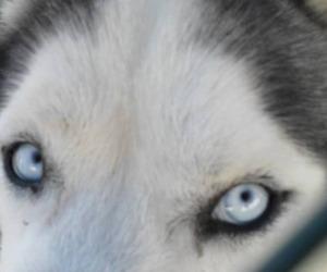 dog, animal, and eyes image