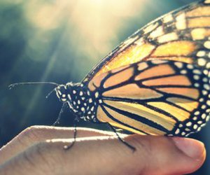 butterfly, hand, and sun image