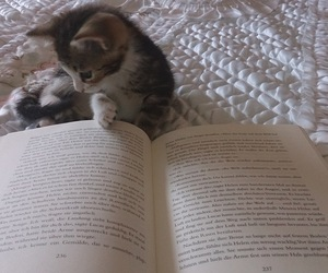 book, kitty, and kitten image