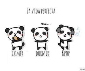 kpop, panda, and comer image