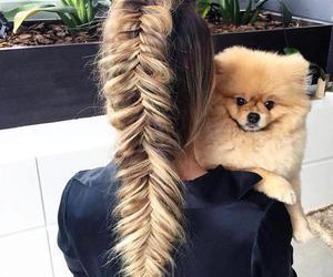 hair, braid, and dog image