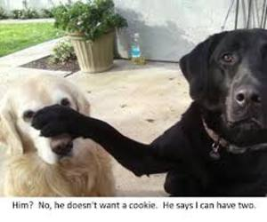 dog, funny, and cookie image