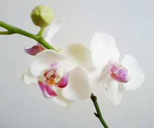flower, orchid, and personal image
