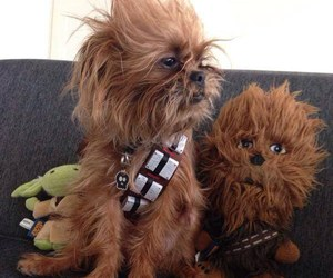 dog, star wars, and chewbacca image