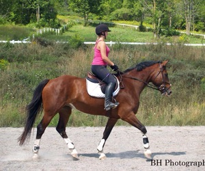 arena, equestrian, and equine image