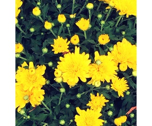 flower, nature, and yellow image