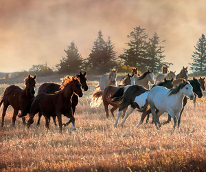 horses and nature image