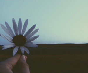 flower and indie image