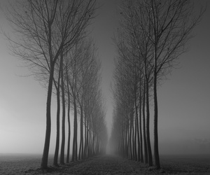 tree, black and white, and black image