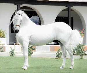 beauty and horse image